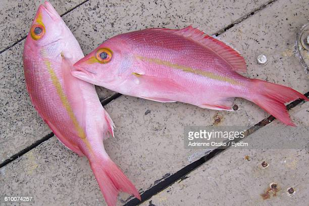 Directly Above Shot Of Fresh Pink Fish On Wooden Floor
