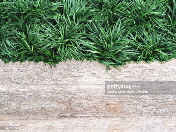 Directly Above Shot Of Grass On Table