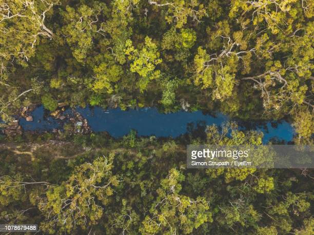 directly above shot of green landscape - river stock pictures, royalty-free photos & images