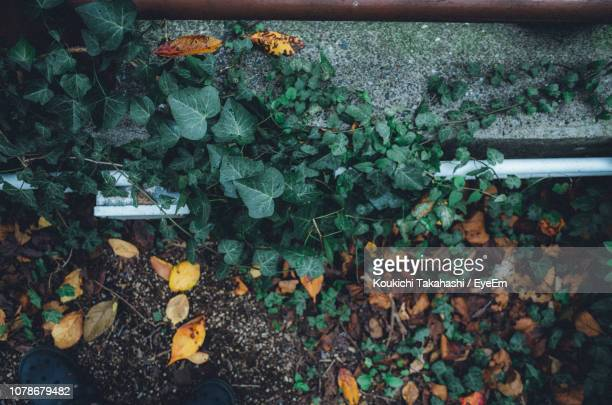 Directly Above Shot Of Leaves On Retaining Wall