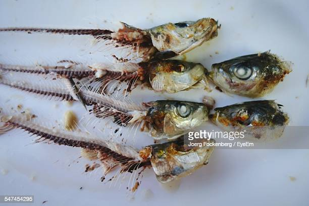 directly above shot of leftover fish bones on white table - animal bones stock photos and pictures