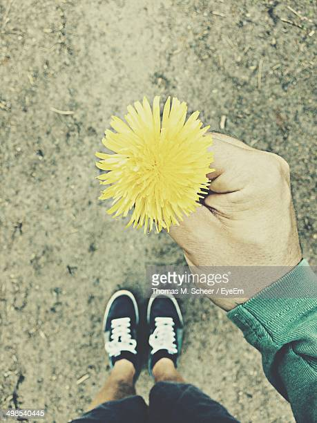 Directly above shot of man holding yellow dandelion on street