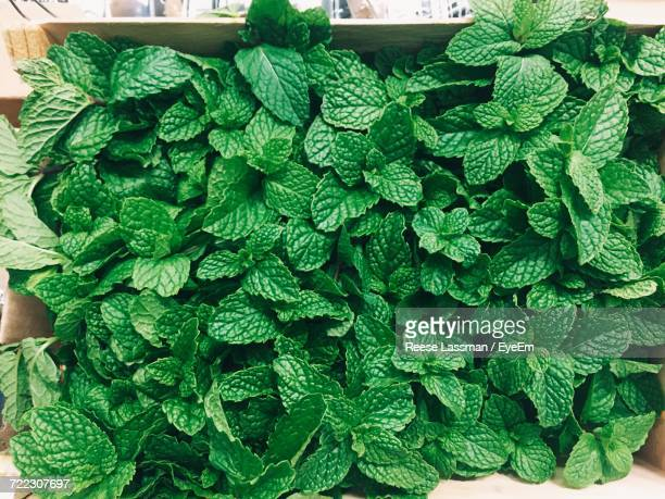 directly above shot of mint leaves in crate - ミント ストックフォトと画像