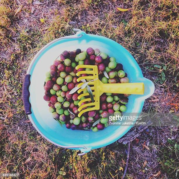 directly above shot of olives in plastic bucket on field - kalamata olive stock pictures, royalty-free photos & images