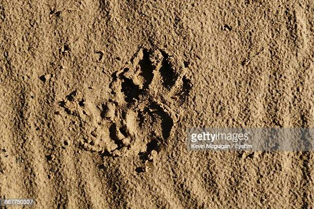 Directly Above Shot Of Paw Print At Beach