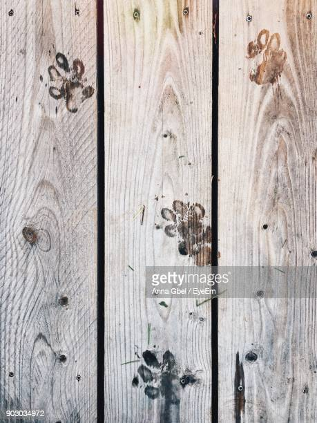 Directly Above Shot Of Paw Prints On Wooden Floor