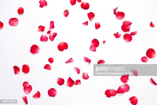 directly above shot of petals on white background - blütenblatt stock-fotos und bilder