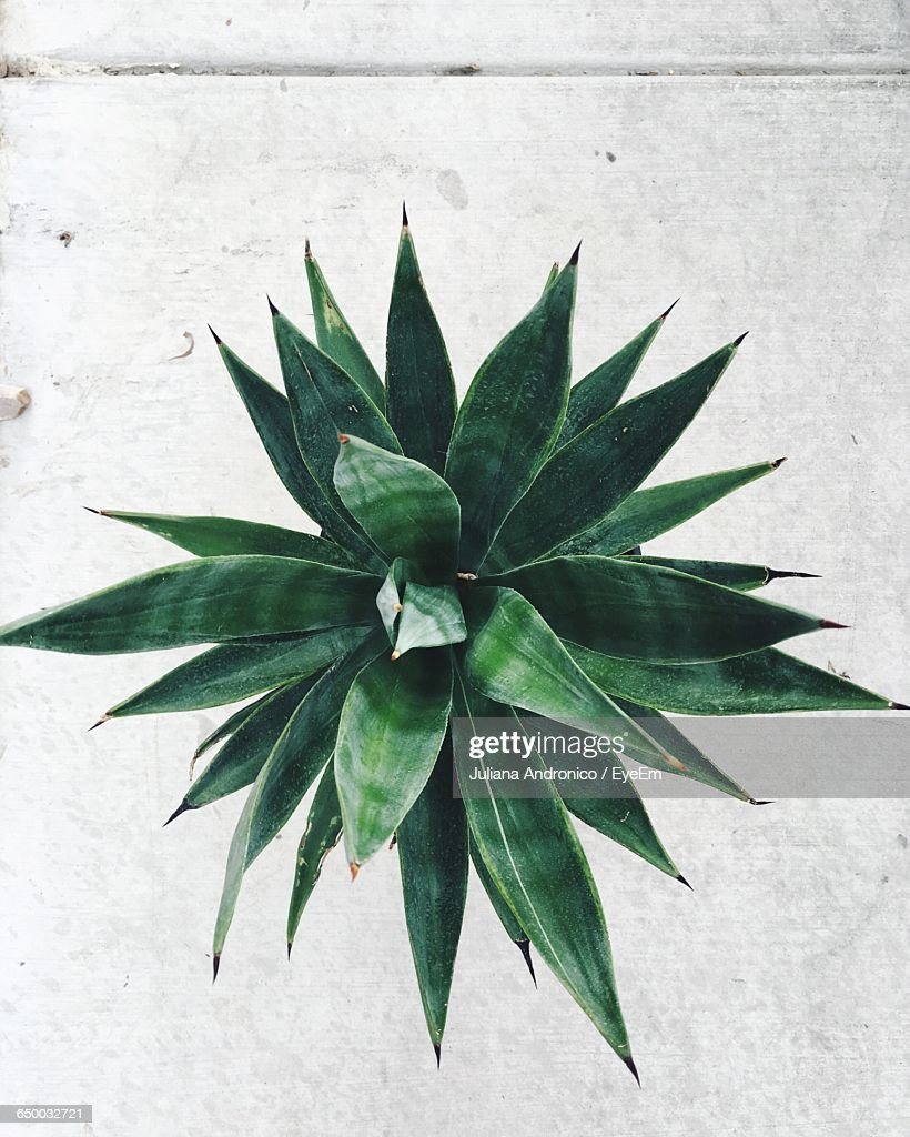 Directly Above Shot Of Plant : Stock Photo