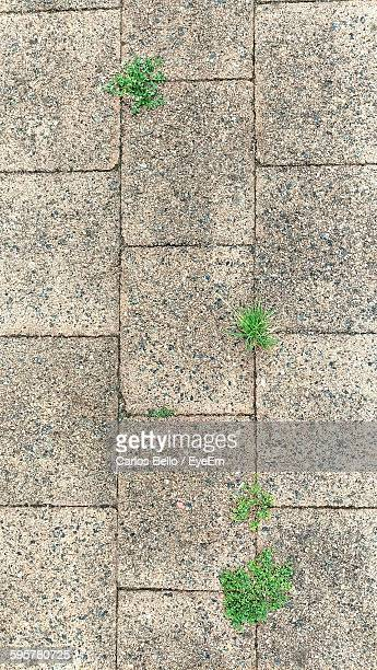 Directly Above Shot Of Plants Growing On Paving Stone Footpath