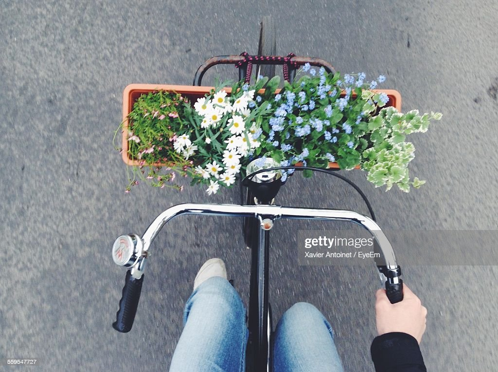 Directly Above Shot Of Plants On Bicycle Basket : Foto de stock