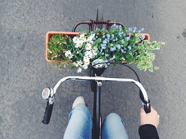 Directly Above Shot Of Plants On Bicycle Basket Wall Art