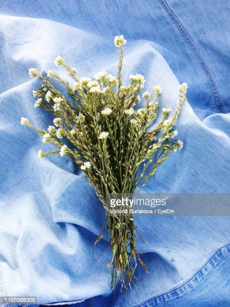 directly above shot of plants on blue textile - burlakova stock-fotos und bilder