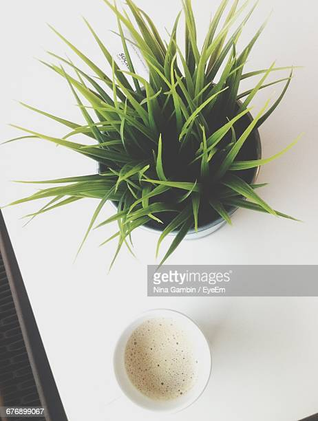 Directly Above Shot Of Potted Plant And Coffee On Table