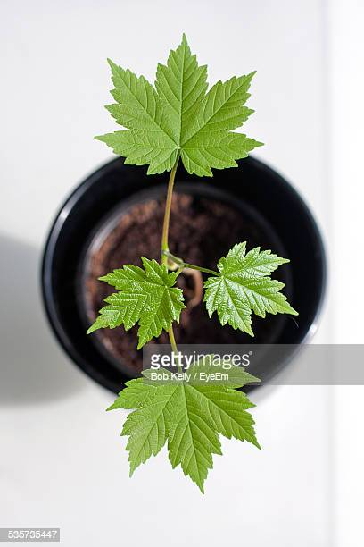 Directly Above Shot Of Potted Plant On White Table
