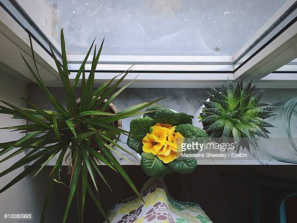 directly above shot of potted plants on window sill - ledge stock pictures, royalty-free photos & images