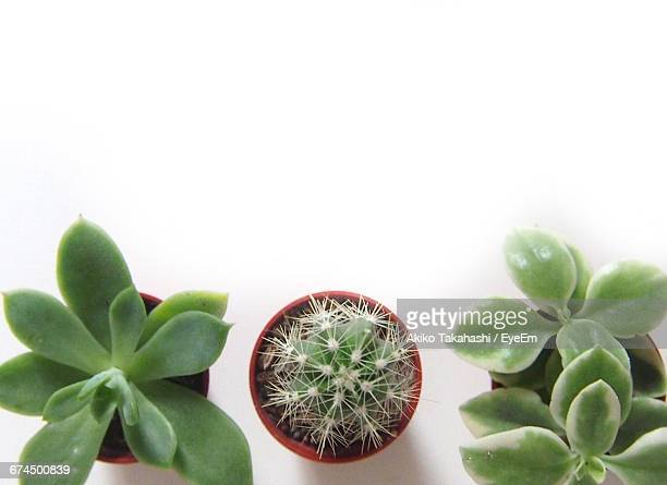 Directly Above Shot Of Potted Succulent Plants On White Background