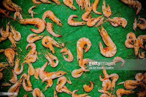 directly above shot of prawns drying on green textile - 車海老料理 ストックフォトと画像