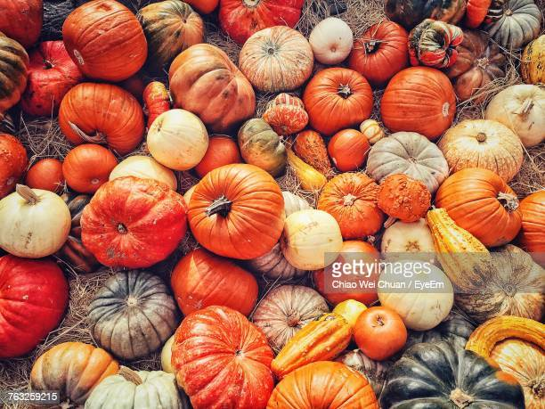 directly above shot of pumpkins for sale - pumpkin stock pictures, royalty-free photos & images