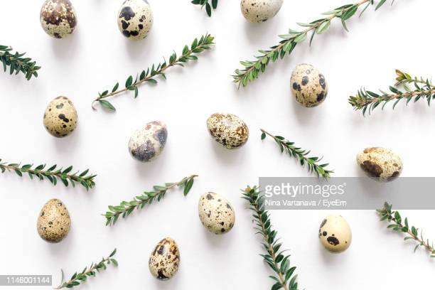 directly above shot of quail eggs and twigs on white background - 小枝 ストックフォトと画像
