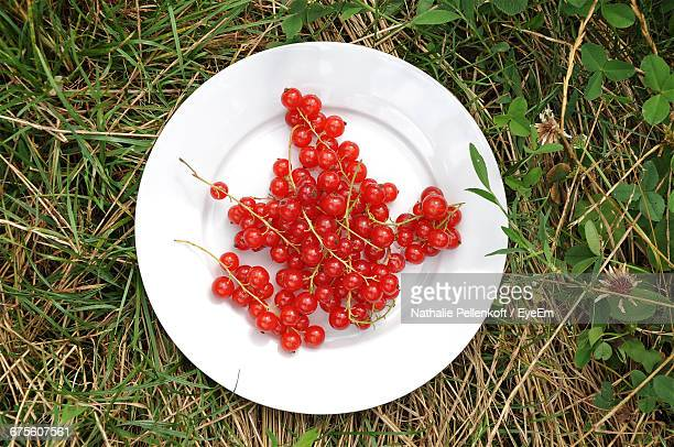 directly above shot of red currants grassy field - nathalie pellenkoft stock pictures, royalty-free photos & images