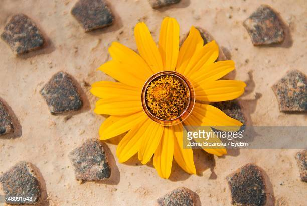Directly Above Shot Of Rings On Yellow Flower At Sandy Beach