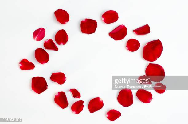 directly above shot of rose petals over white background - rose petals stock pictures, royalty-free photos & images