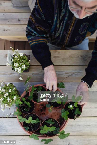 directly above shot of senior man arranging potted plants in tray at table - only senior men stock pictures, royalty-free photos & images