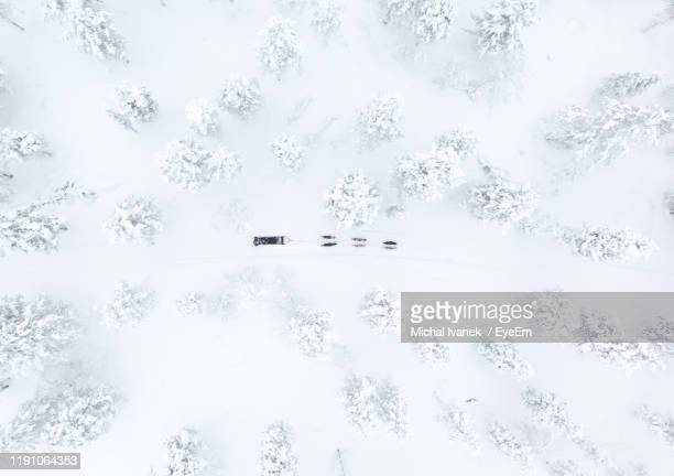 directly above shot of sled dog on snow covered field - husky stock pictures, royalty-free photos & images