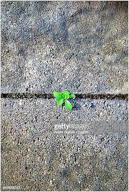 Directly Above Shot Of Small Plant Growing On Street