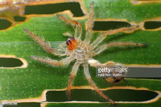 directly above shot of spider on leaf - arthropod stock pictures, royalty-free photos & images