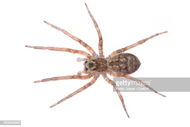 directly above shot of spider on white background - spider stock pictures, royalty-free photos & images