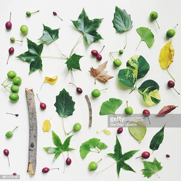 Directly Above Shot Of Spring Fruits And Leaves Against White Background
