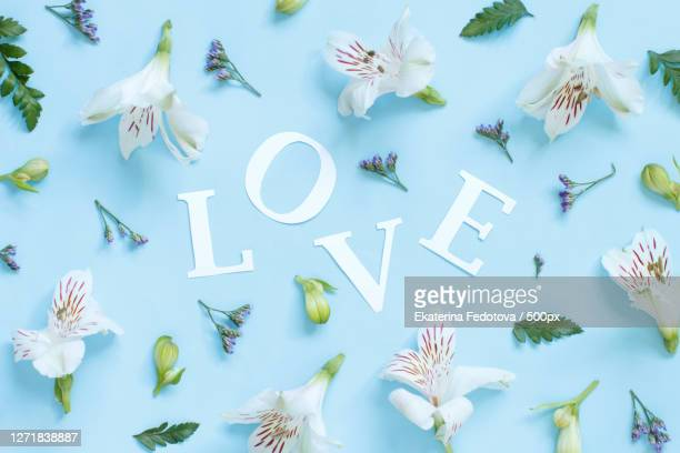 directly above shot of toys over white background - alstroemeria stock pictures, royalty-free photos & images