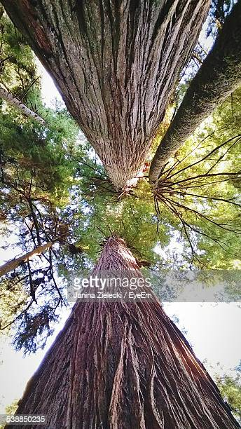 Directly Above Shot Of Trees In Forest