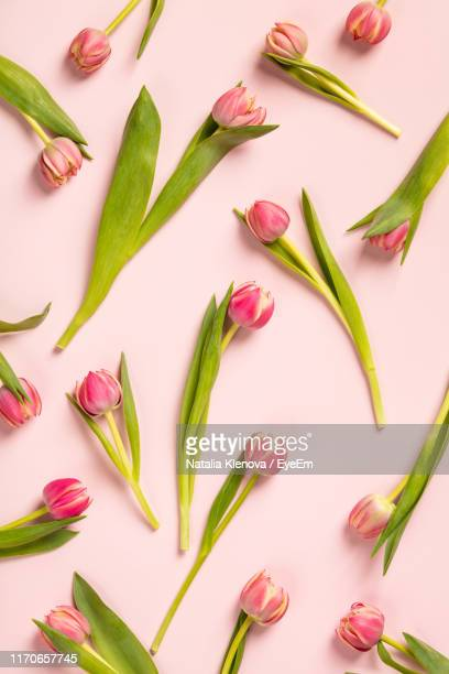 directly above shot of tulips on pink background - tulip stock pictures, royalty-free photos & images
