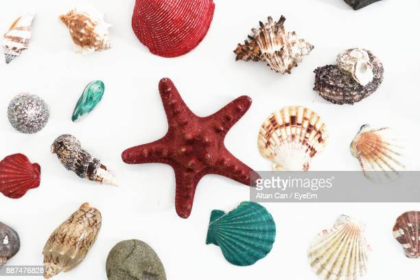 Directly Above Shot Of Various Animal Shells On White Background