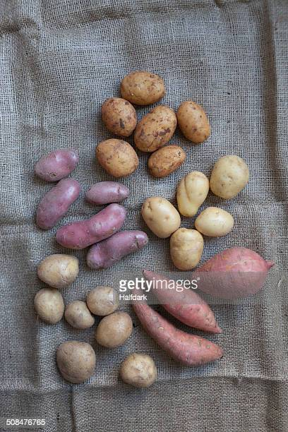 Directly above shot of various potatoes on sack