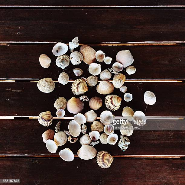 Directly Above Shot Of Various Shells On Wooden Table