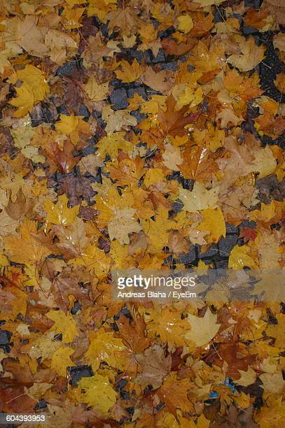 Directly Above Shot Of Wet Yellow Leaves On Field During Autumn