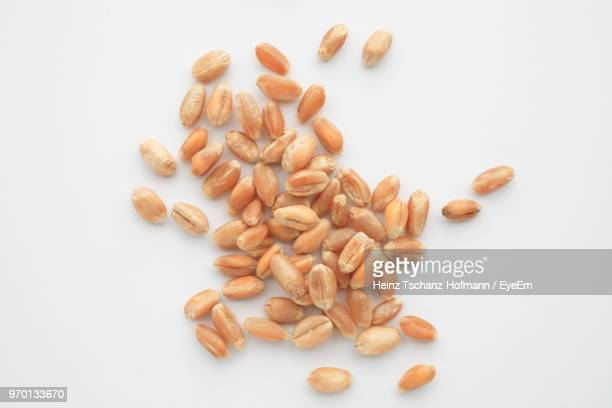 directly above shot of wheat over white background - wheat stock pictures, royalty-free photos & images