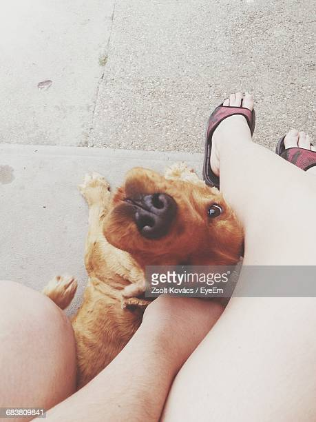 Directly Above Shot Of Woman Stroking Her Dog