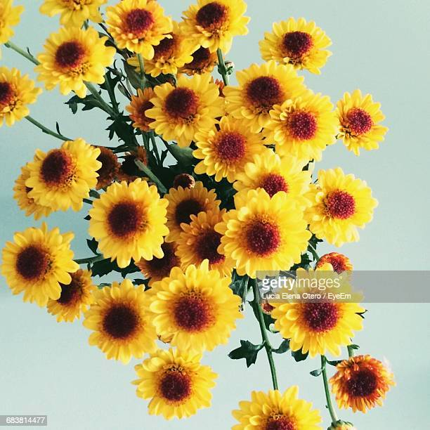 Directly Above Shot Of Yellow Flowers Against White Background