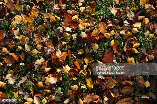 Directly Above Shot Of Yellow Leaves On Grassy Field During Autumn