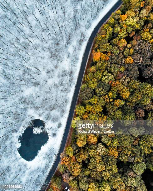 directly above shots of trees in forest - erfurt stock pictures, royalty-free photos & images