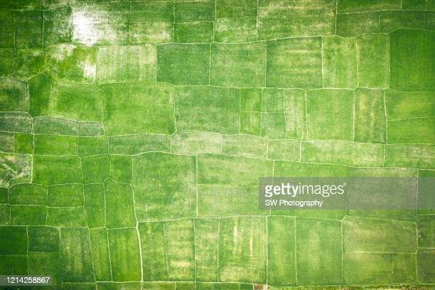 directly above view of agricultural fields in chittagong area - gras stock pictures, royalty-free photos & images