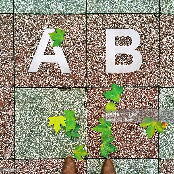 Directly Above View Of Alphabets And Fallen Leaves On Footpath