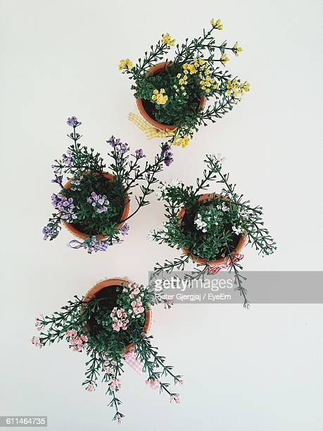 Directly Above View Of Artificial Flowering Plants Against White Background
