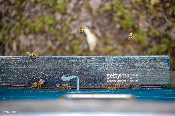 Directly Above View Of Bees By Window