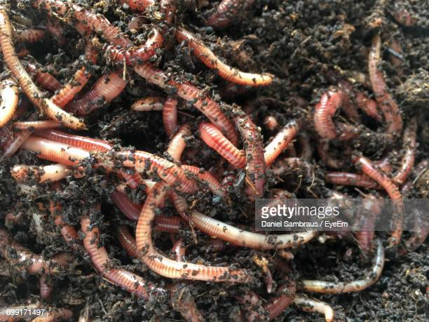 directly above view of earthworms in dirt - worm stock photos and pictures