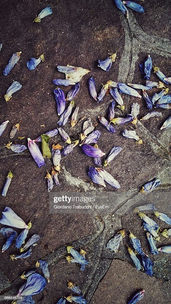 Directly Above View Of Fallen Flowers : Stock Photo